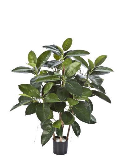 rubber-plants-33803n